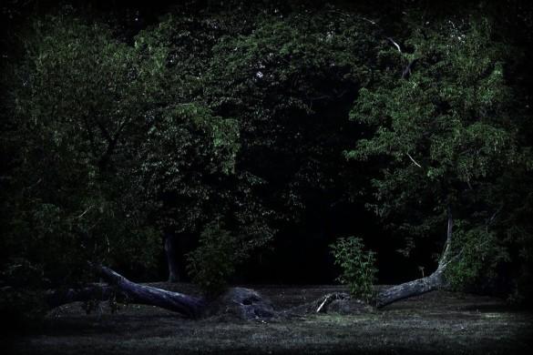 bosque la espera