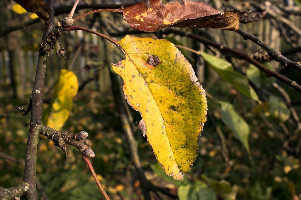 poemas sobre el otoño